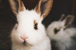 conejo mascota de niños