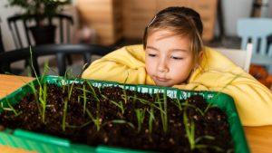 crear tu huerto en casa