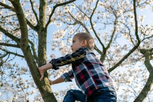 superar el miedo de escalar árboles